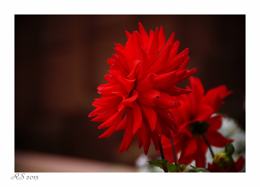 Red im Herbst