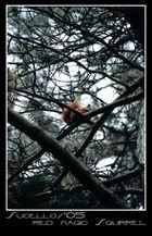 red magic squirrel