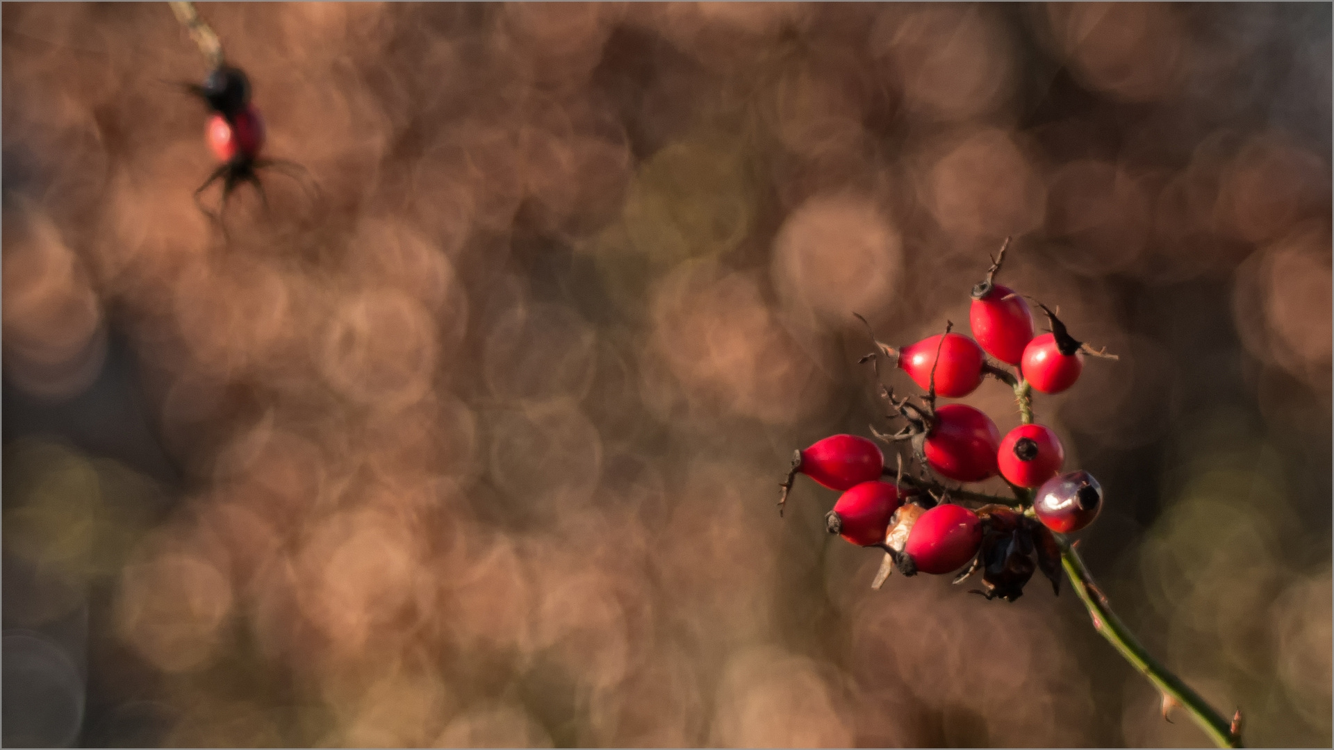 Red Of December