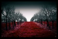 Red Plantage