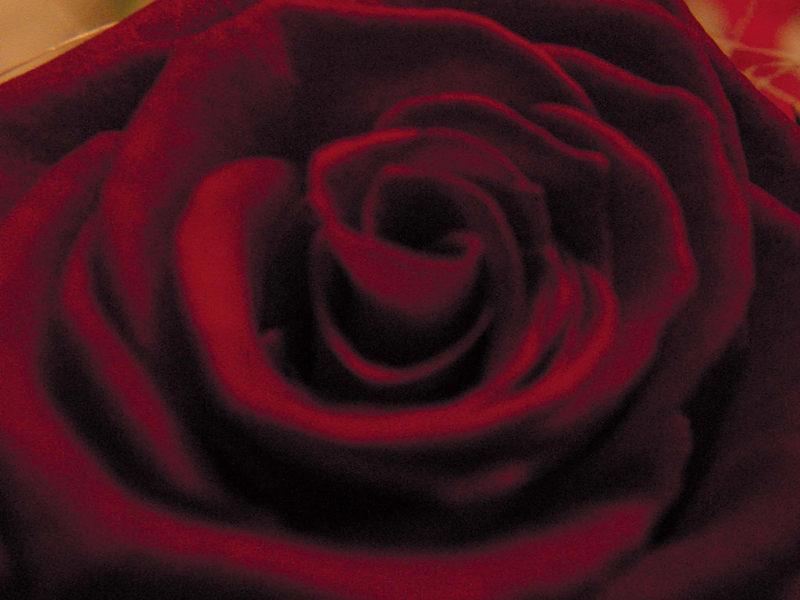 Red Rose *g*