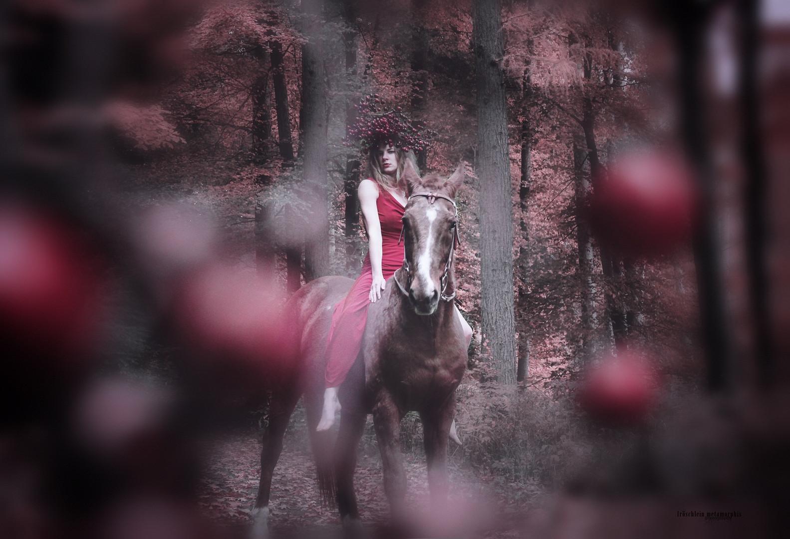 Red Tales | Metamorphis