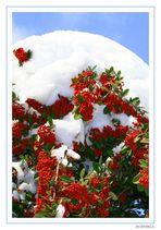 RedGreen&WhiteBlue
