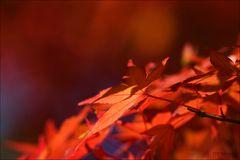 redlight two