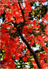 Reds of an Autumn Afternoon No.2 - An Annapolis Impression