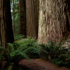 ..redwoodblues..