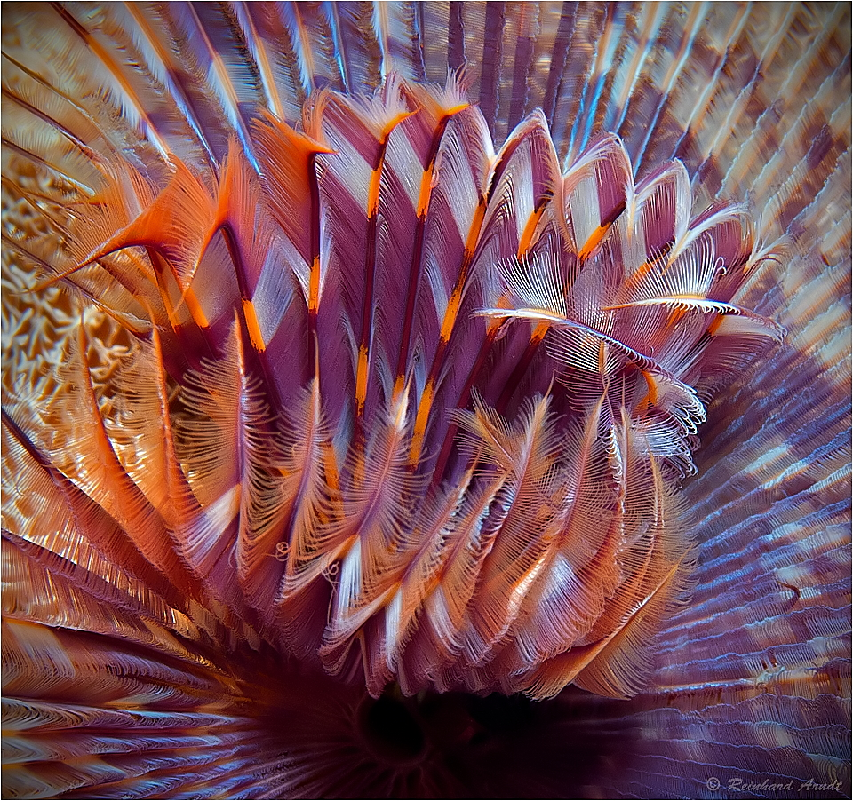 Reef Art