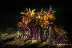 Reef by night...