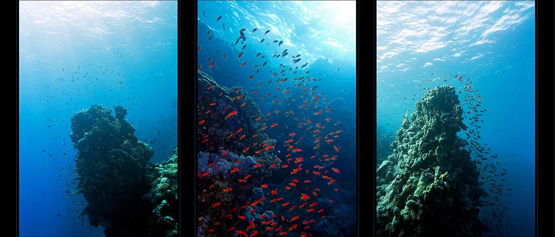 *reef-verticals*