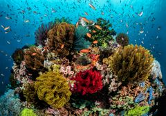 Reefs of Anilao