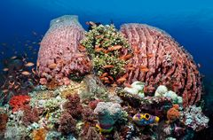 reefs of komodo 2