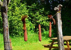 Réfectoire d'écureuils