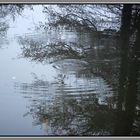 Reflections...........