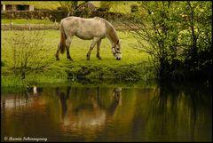 Reflejo caballuno / Reflection horsey