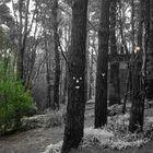 Reflejos en el bosque
