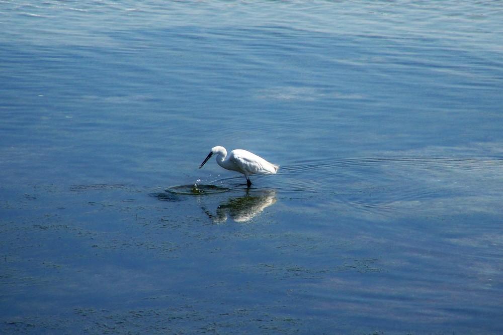 Reflejos en el mar