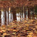 Reflejos y colores de otoño