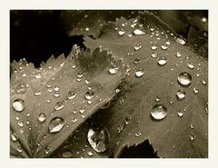 Reflektive rain drops