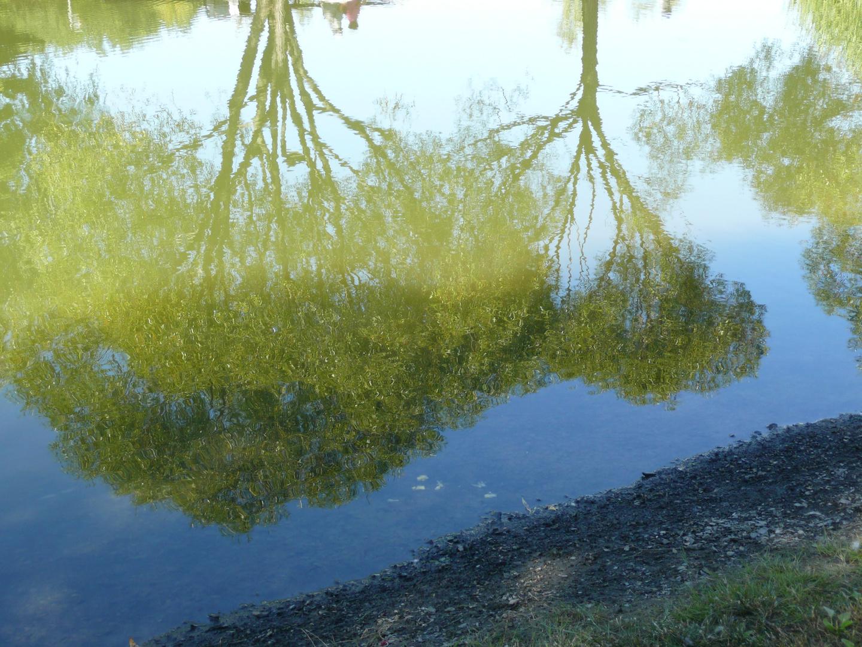 Reflet de l'arbre