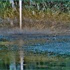 """""""reflets dans l eau """" de C debussy  Cliché dédié à Corail..."""