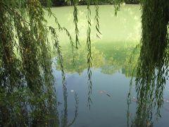 ..Reflets dans la Marne...