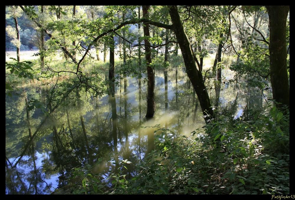 reflets dans les bois