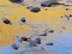 ..Reflets de Mélèzes dans le torrent (05)