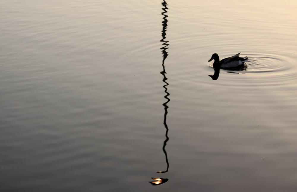 Reflex and duck