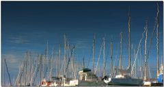 Reflexes al port