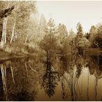 Reflexionen im Steinacher Ried