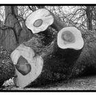 Regard d'un arbre échoué