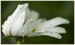 regen 3