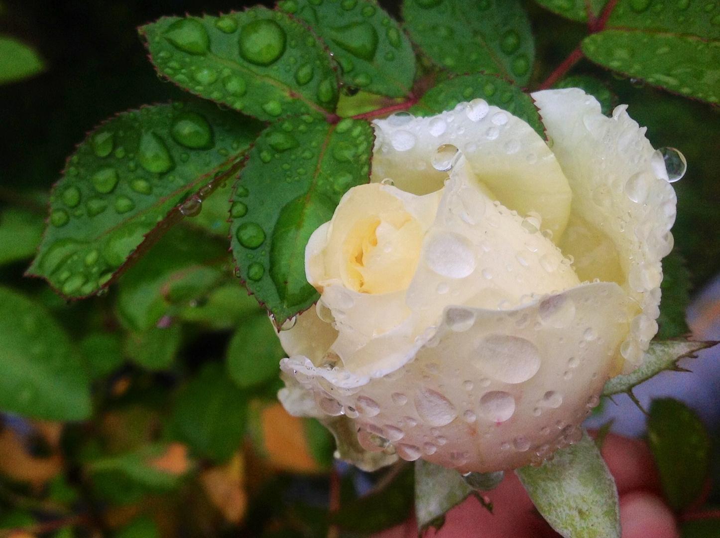 Regen ade, scheiden tut nicht weh....