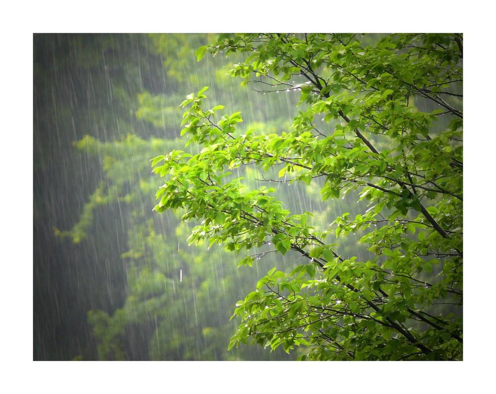 Regen I