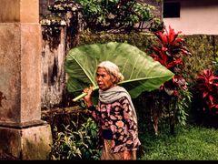 Regen ?  Ich hab doch meinen Regenschirm . .DSC_7322-2