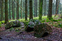 Regen im Fichtenwald