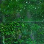 Regen im Focus