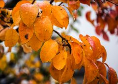 Regen im Herbst fotografiert von Arno