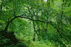 Regen im Laubwald