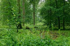 Regen im Sommerwald