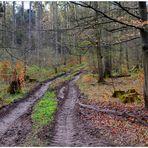 Regen im Wald (Lluvia en el bosque)