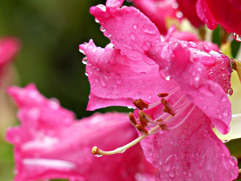Regen macht schön
