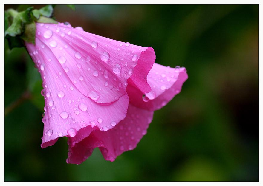 regen regen im wendland