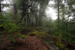 Regen-Wald 1