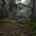 Regen-Wald 2