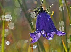 Regen - Zauber - Welt! - La féerie de la nature en temps de pluie ...