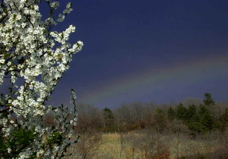 Regenbogen (2)