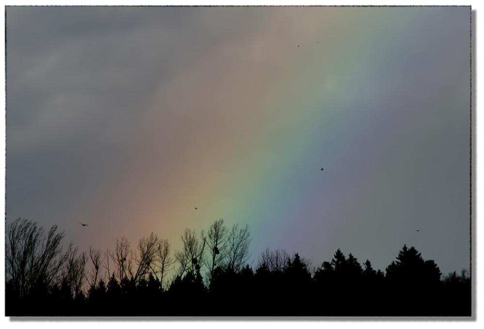 Regenbogen im Januar