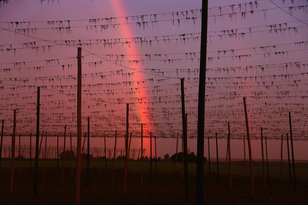 Regenbogen im Netz