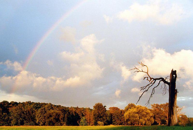 Regenbogen - Rogalin / Polen